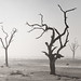 Dead Tree Dust Storm by Panorama Paul