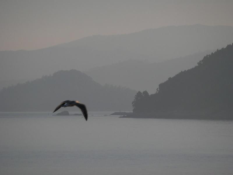 Un pájaro de mañana