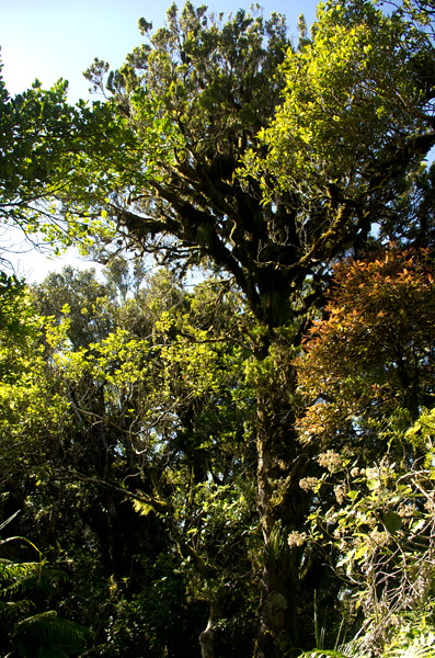 trees & bush at Mt Taranaki near Dawson Falls 23 1 15 K54865