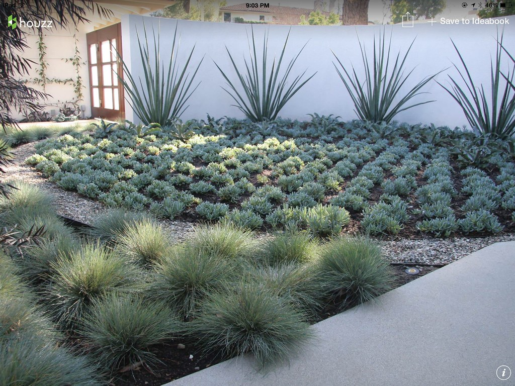 Drought Tolerant Landscaping Drought Turf