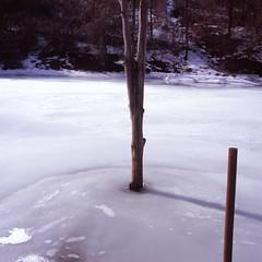 Iced Posts