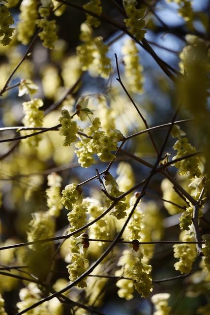 日, 2015-04-19 13:16 - Brooklyn Botanic Garden