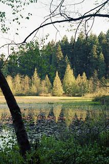 Beaver Lake, Stanley Park, Vancouver