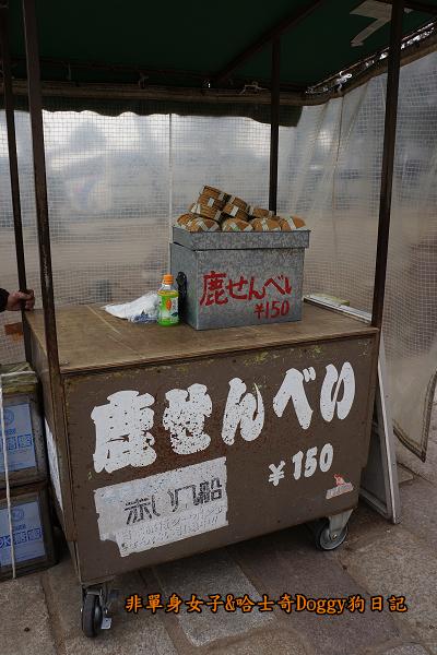 日本奈良公園東大寺22