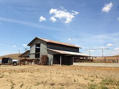 Flynn Ranch- Wheat scout 031