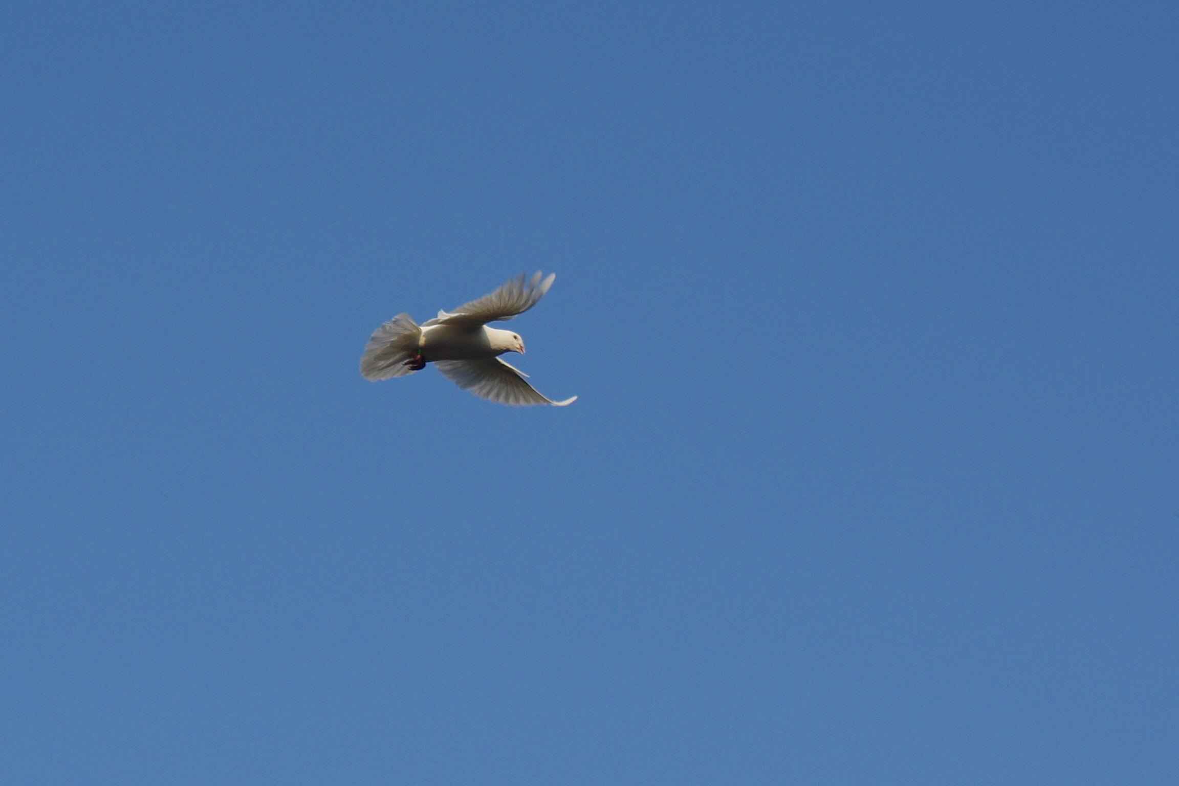 有空就打打鴿子
