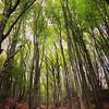Ihr kennt das: vor lauter Bäumen den Wald sehen...
