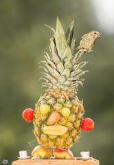 fruit table walk