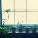 Office Window Still Life by Idiolect