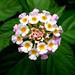 Wild flower..... by sorojitghosh17@yahoo.com
