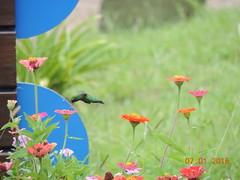 2015 01_Termas del Arapey_Pica Flor
