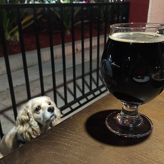 #kvpinmybelly Sipping @BelchingBeaver Peanut Butter Stout at @CommonTheorySD in #SanDiego. Also, Daisy photobomb #beer