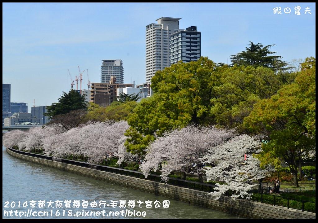 2014京都大阪賞櫻自由行-毛馬櫻之宮公園DSC_2124