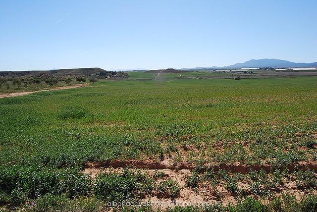 Murcia - Spring