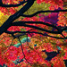 Red leaves of autumn in Hibiya Park by B Lucava