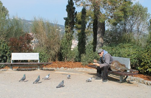 Guitarist and pigeons