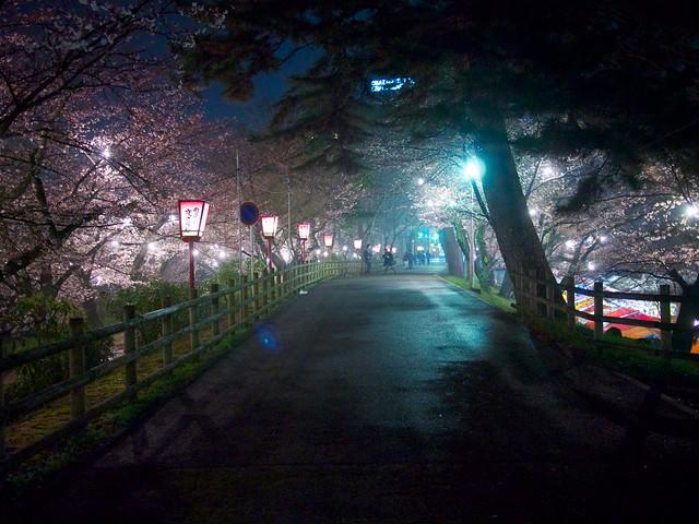 150329_OkazakiNightSakura 6