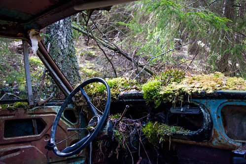 Natur taking over at the Car graveyard