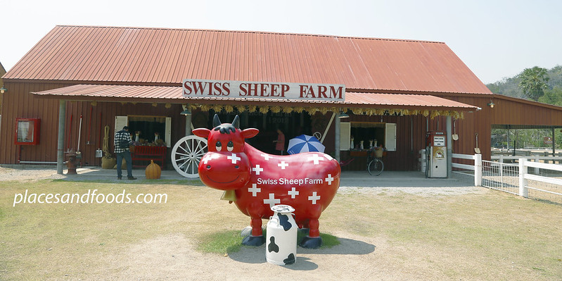 cha am swiss farm with red cow