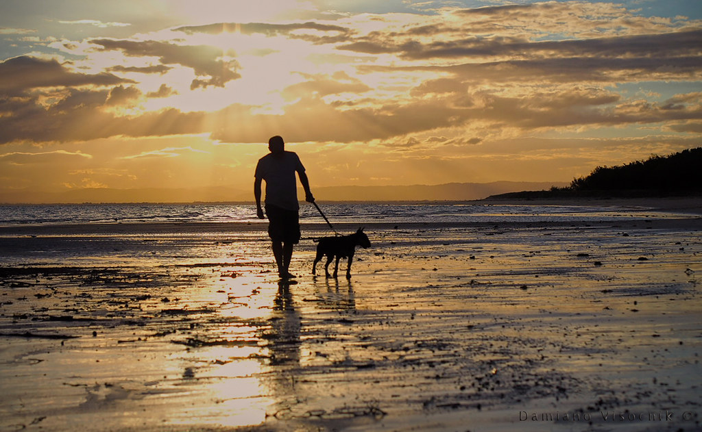 Sunset dog walk at low tide_c