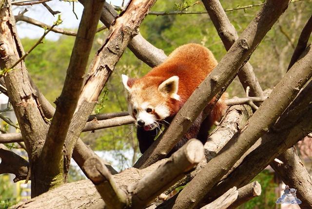 Zoo Bratislava 18.04.2015 124