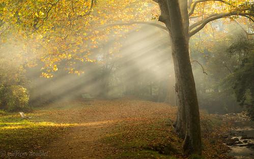 nature automne canon river soleil lumière rivière provence arbre matin inexplore canoneos6d canonef100lf28isusm