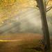 Un matin d'automne, au bord de la rivière by Guizzosoprano