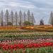 Finding Netherlands by arcreyes [-ratamahatta-]