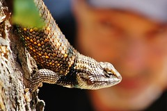Lizard Profile with Michael Chuck Bokeh