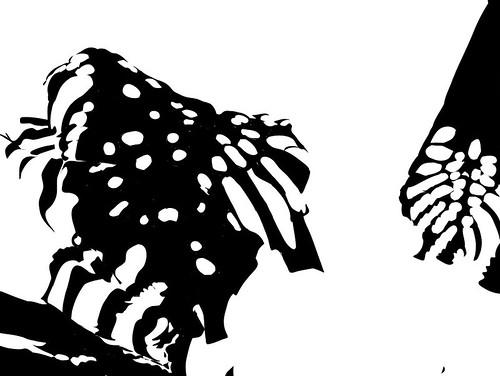 2015.03.09 Plant Shadow Shapes