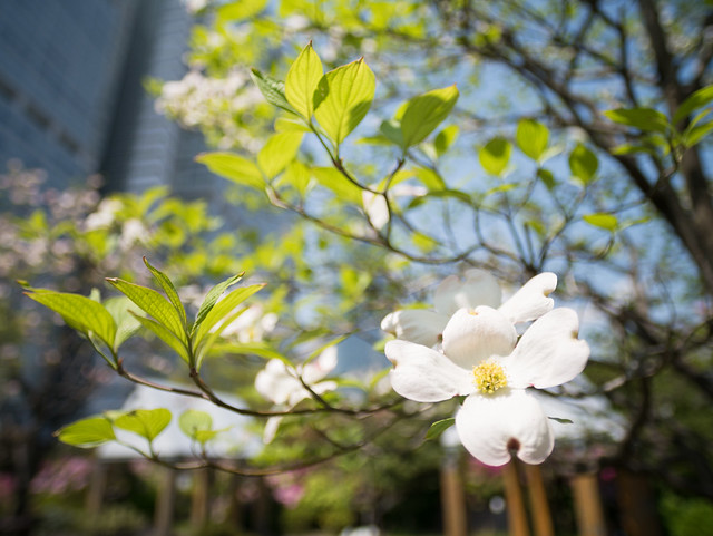 Kowa Prominar 12mm @ Wideopen, Magnolia