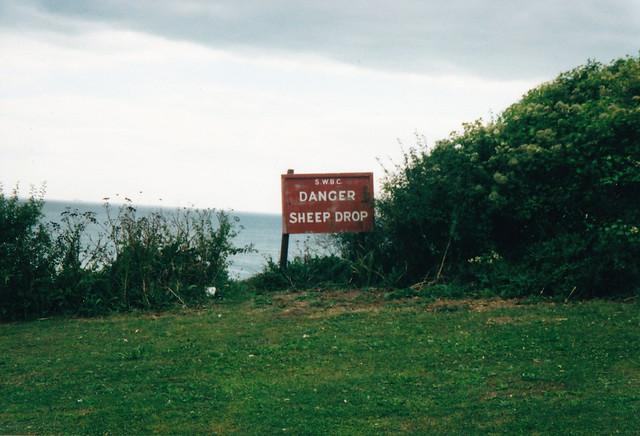Sheep Drop at Ventnor