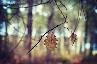 to be Leaf in the forest