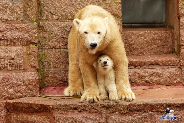 Eisbär Taufe Fiete Zoo Rostock 31.03.21015 167