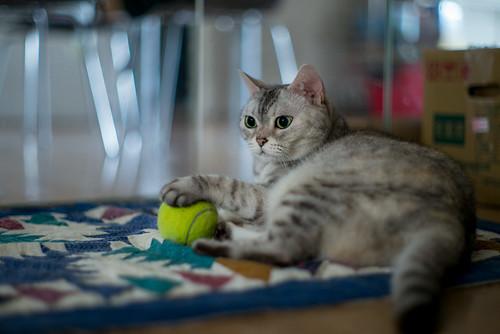 Holding her tennis ball