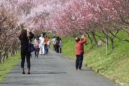Anzu-no-sato apricot park