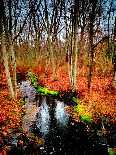 creek moss spring stream coloronacloudyday lakeoberst