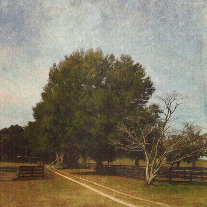 iPhone landscapes