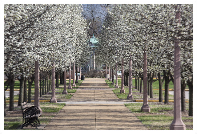 Forest Park 2015-04-03 2