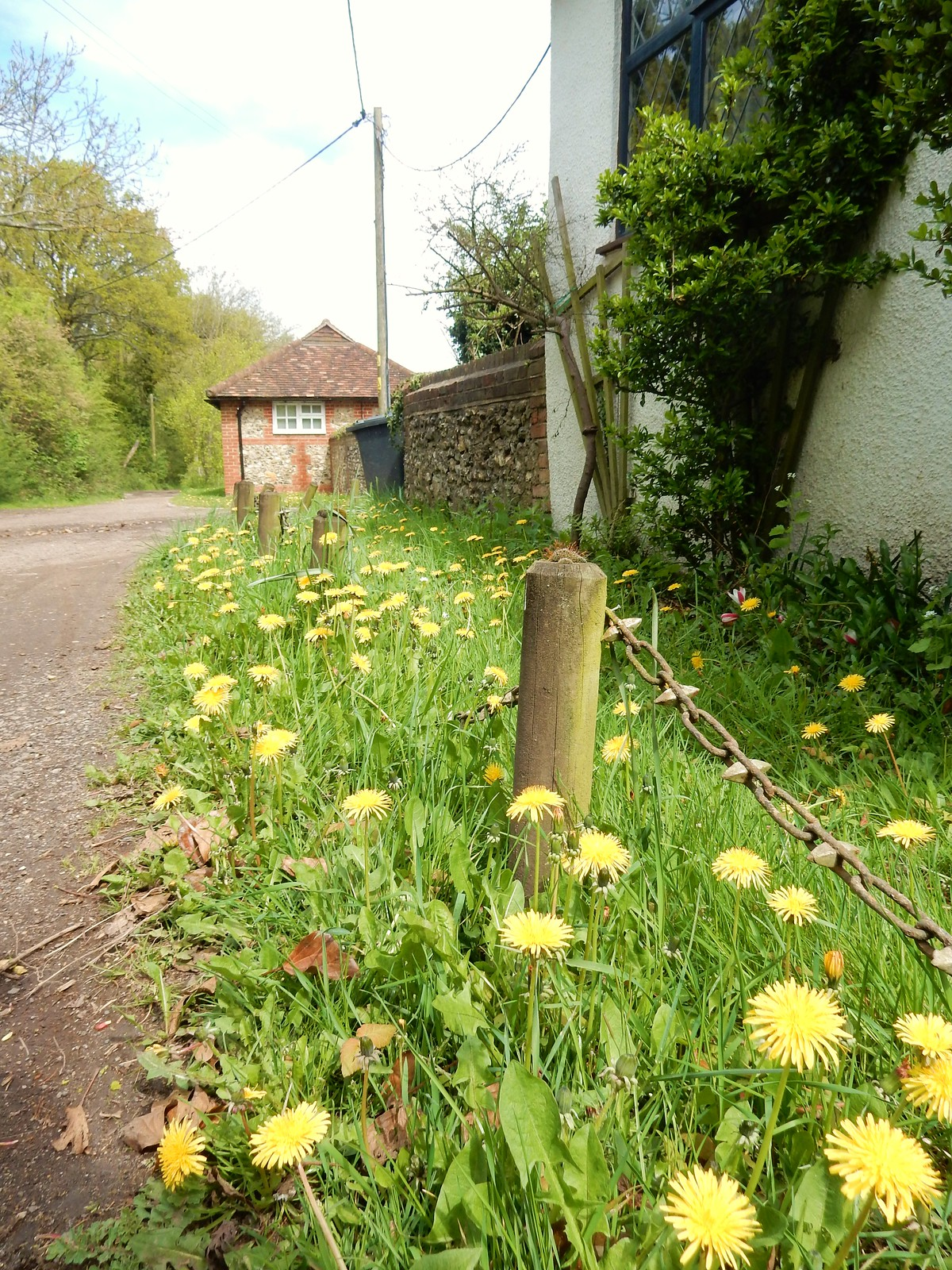 Dandelions Whyteleafe to Woldingham