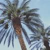 Feels like summer. #lookingup #worklife #palms #lasvegas #unlv