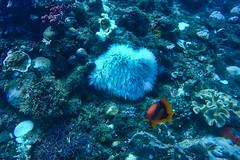 PP Divers 10