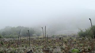 Mistige Mauna Kea