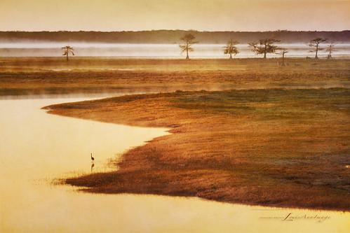 bird water saint fog sunrise river florida waterbird calm photoart johns cloudsstormssunsetssunrises