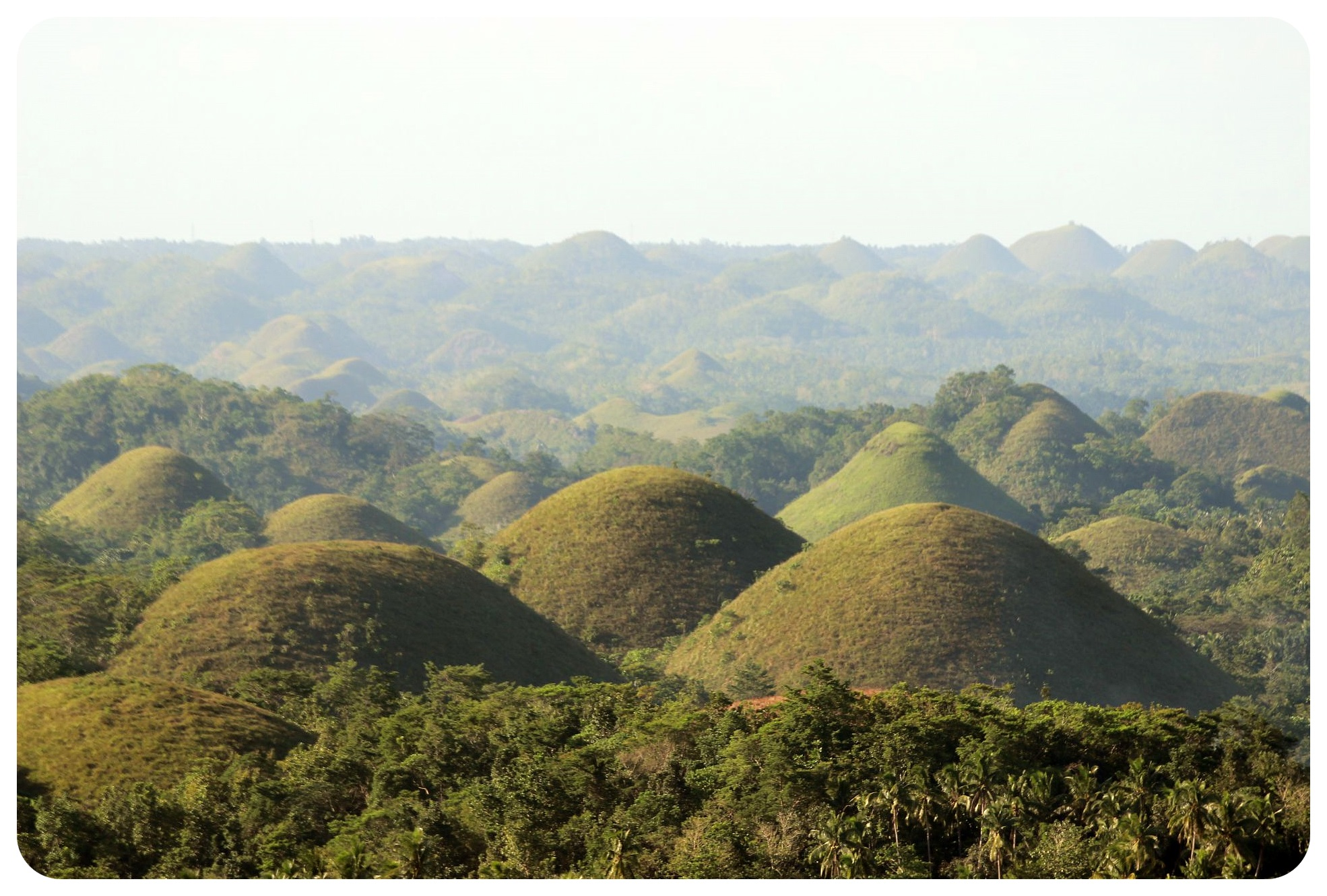 Tarsiers and chocolate hills in Bohol | The Philippines ...