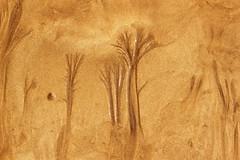 Árvores de Areia