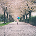 Rainy but Beautiful Spring in Vancouver by Crabcreek