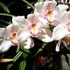 Orchids, 3/21/15
