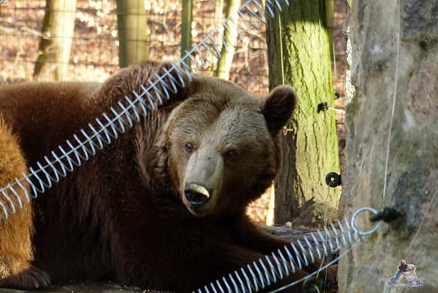 Zoo Eberswalde 22.03.2015   307