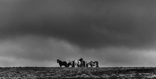horses blackandwhite clouds iceland icelandichorses